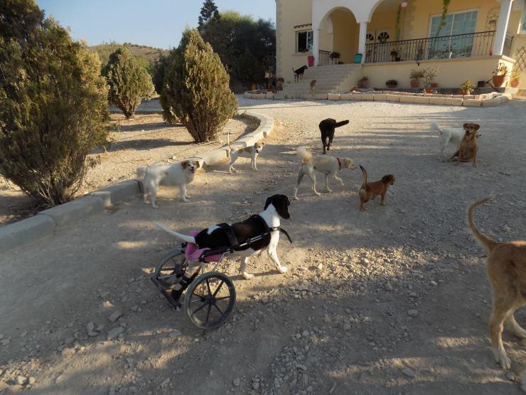 hundehaus